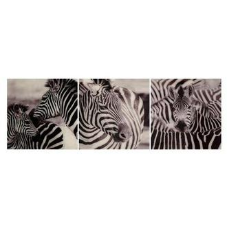 Zebra Set of 3 Acrylic Wall Art