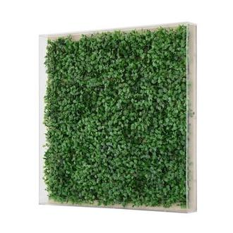 Herbe Shadow Box