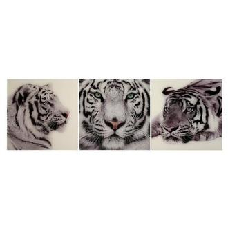 Tiger Set of 3 Acrylic Wall Art